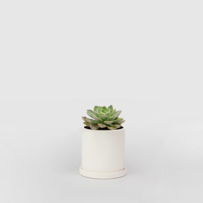 Succulent Sunny White Ceramic Pot Set 100mm