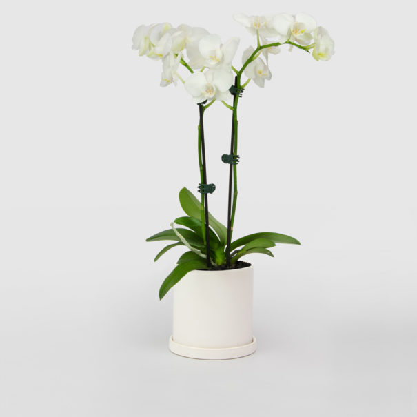 Orchid White Ceramic Pot Set 100mm