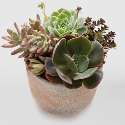 Small Succulent Bowl 2