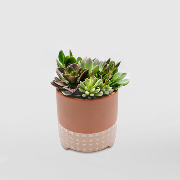 Succulent Bowl Small Gift Plant Tequila Sunrise