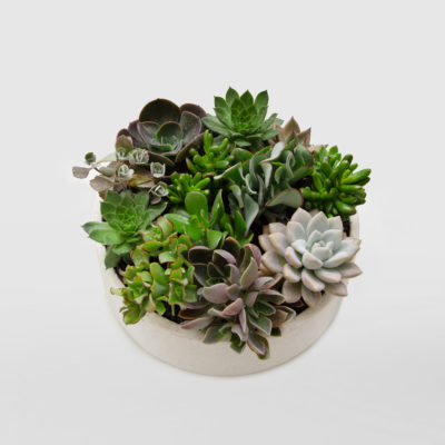 Succulent Bowl Gift Terrazzo Large