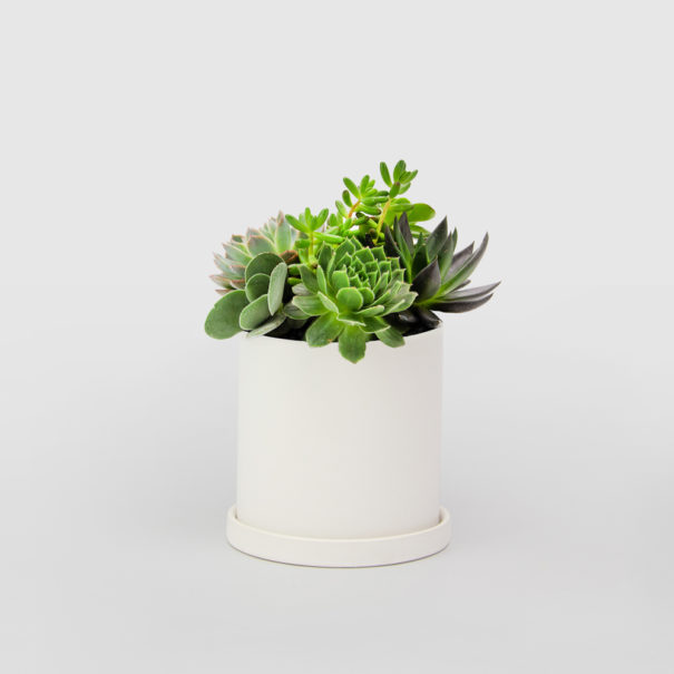 Small Succulent Bowl
