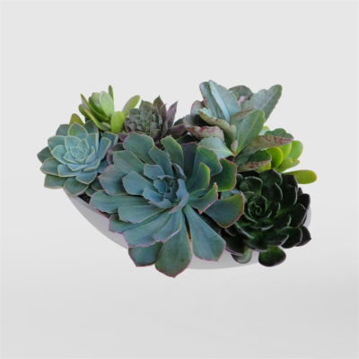 Succulent Boat Bowl top