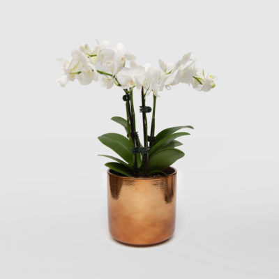 Orchid Ceramic Copper Pot