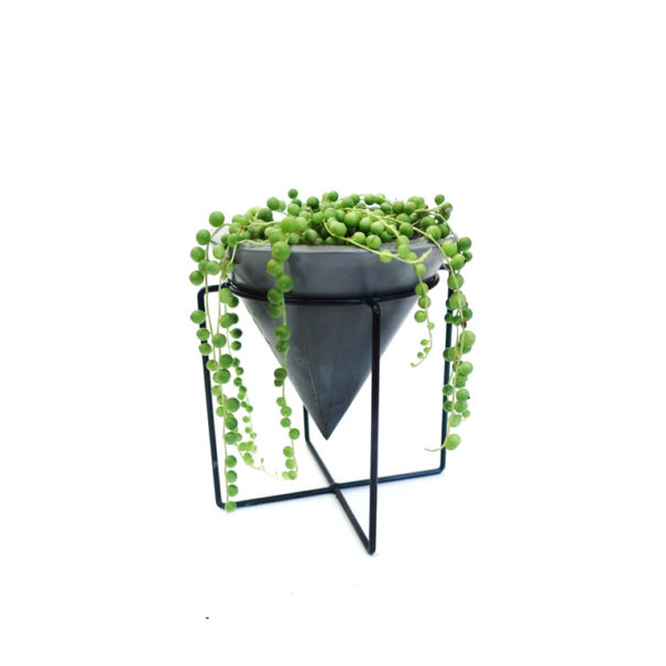 String of Pearls Cone Planter
