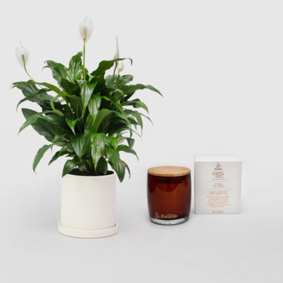 Peace Lily Living Gift Set Candle Gift