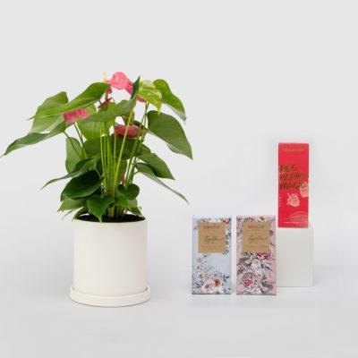 Anthurium Living Gift Set Winnow Chocolates Tea Drop