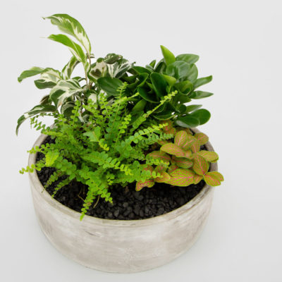 Midnight Garden Indoor Concrete Bowl Gift Plant