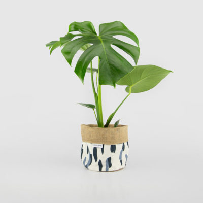 Monstera Deliciosa Planter Bag Blue