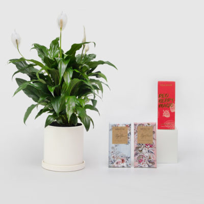 Peace Lily Living Gift Set Winnow Chocolates Tea Drop