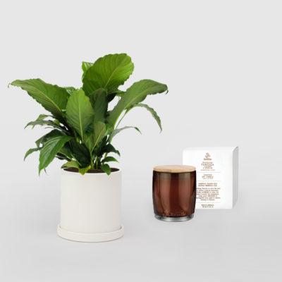 Peace Lily Urban Rituelle Soy Candle Vanilla Lavender