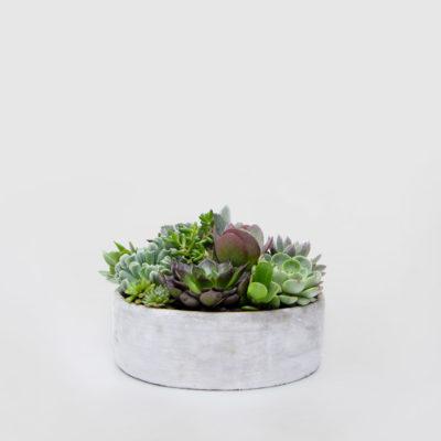 Succulent Concrete Bowl Gift Plant