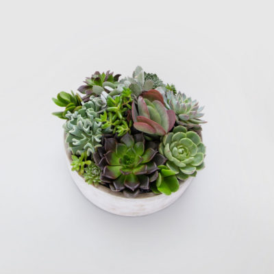 Medium Succulent Bowl Arrangement