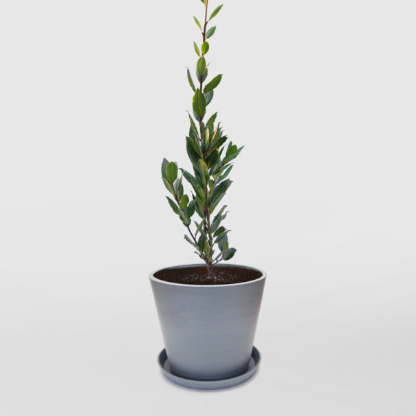 Bay Tree EcoPot Large Blue Grey