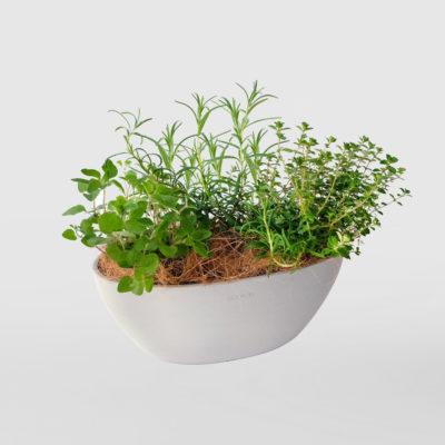 Herb Trio Gift Plant Ecopot