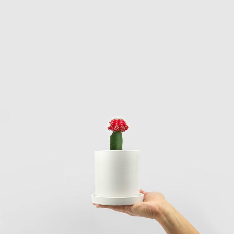 Moon Cactus Ceramic Pot Set 100mm