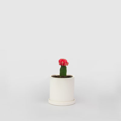 Moon Cactus Ceramic Pot Set 100mm