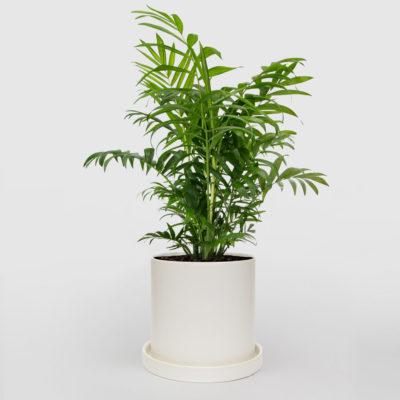 Parlour Palm White Ceramic Pot Set 210mm
