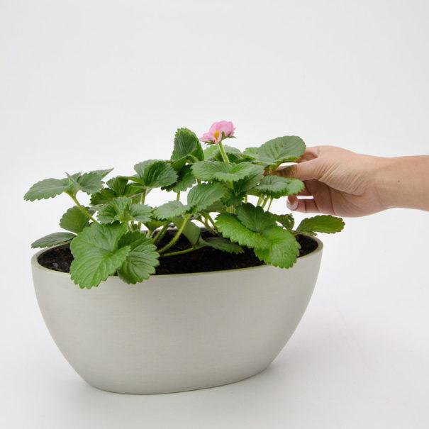 Strawberry Ecopot Boat Planter Gift Plant 2