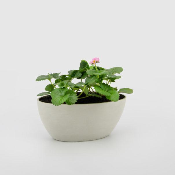 Strawberry Ecopot Boat Planter Gift Plant