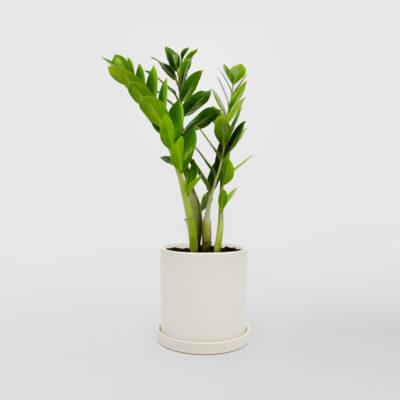 Zanzibar Gem White Ceramic Pot Set 150mm