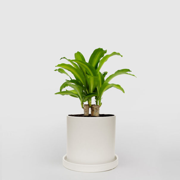 Happy Plant White Ceramic Pot Set 210mm