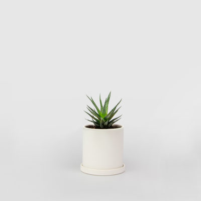 Haworthia Succulent White Ceramic Pot Set 100mm