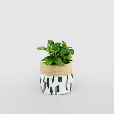 Peperomia Baby Rubber Planter Bag Blue