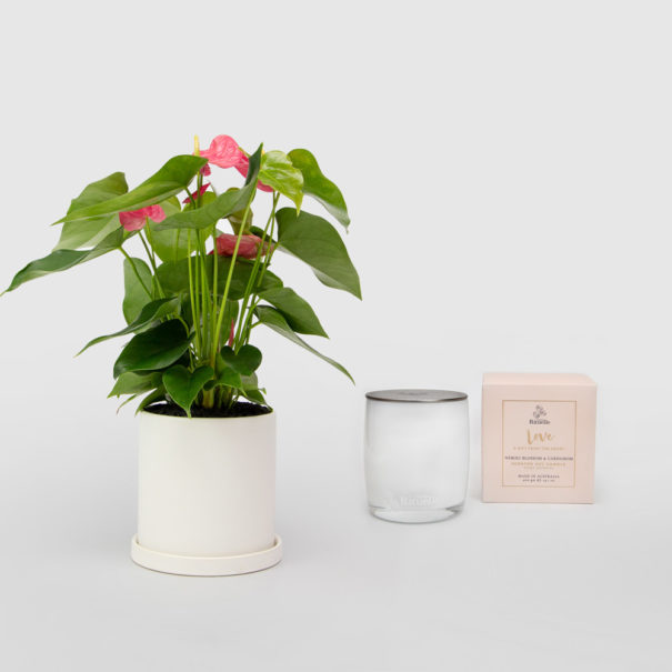 Anthurium Living Gift Set Urban Rituelle Soy Candle Love