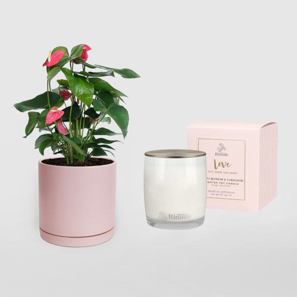 Anthurium Pink Urban Rituelle Love Soy Candle