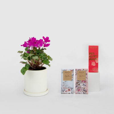 Cyclamen Living Gift Set