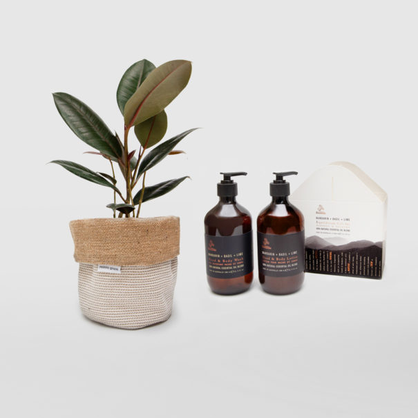 Rubber Plant Ficus Elastica Planter Bag Basketweave Gift Set