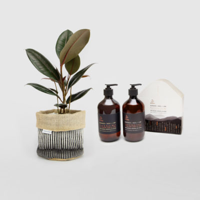 Rubber Plant Planter Bag Gift Set