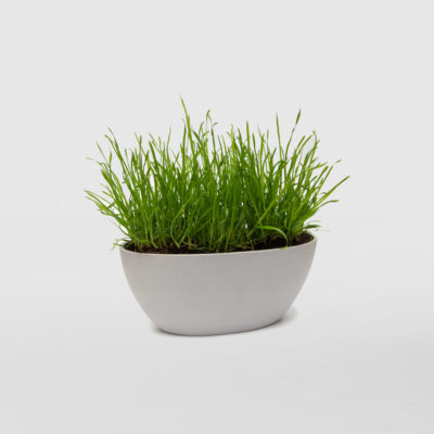 Cat Grass Ecopot Gift