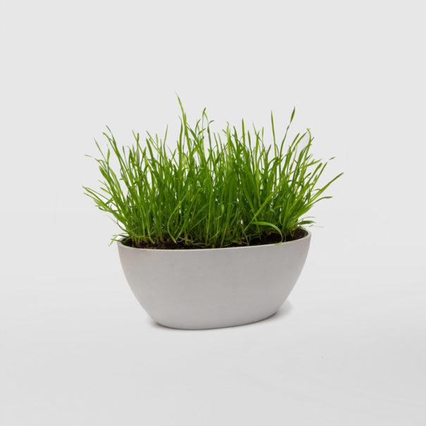 Cat Grass Ecopot Gift