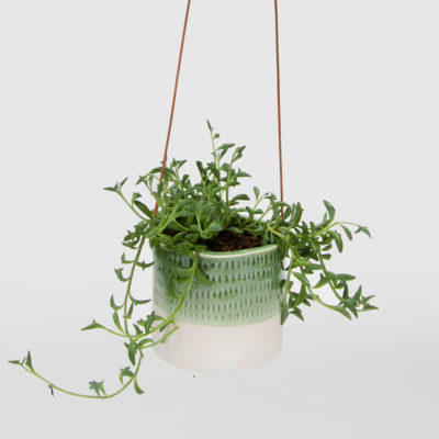 String of Dolphins Hanging Basket