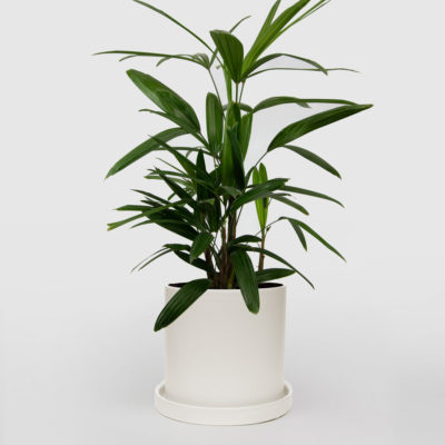 Lady Palm White Ceramic Pot Set 210mm
