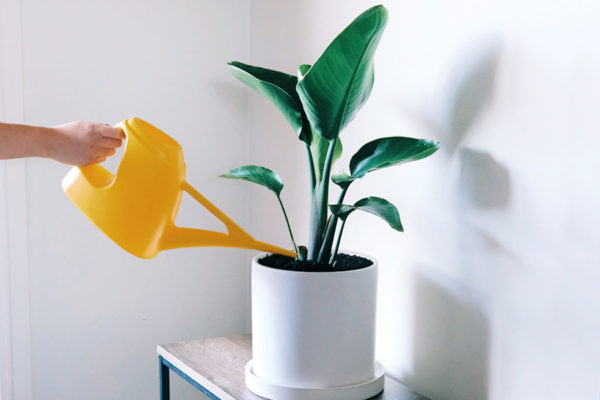 Plant Care How to water my plants