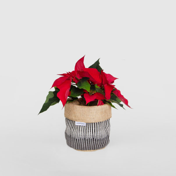 Poinsettia Planter Bag Black