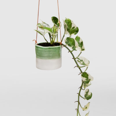 Devils Ivy Snow Queen-in-Mini Ceramic Hanging Basket