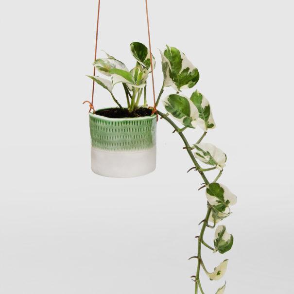 Devils Ivy Snow Queen-in-Mini Ceramic Hanging Basket