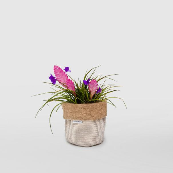 Tillandsia Cyanea Pink Quill Planter Bag Basketweave