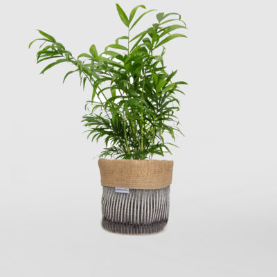 Parlour Palm Planter Bag Black