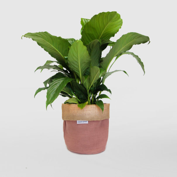 Peace Lily Planter Bag Pink
