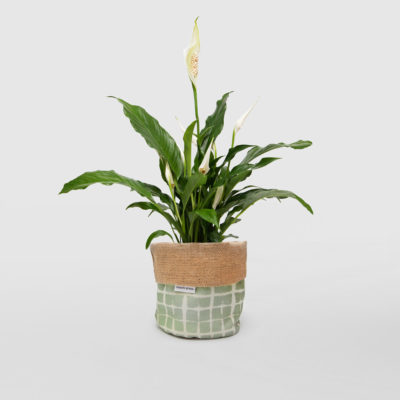 Peace Lily Planter Bag Sage Green