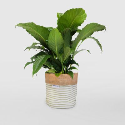 Peace Lily Planter Bag Sage Stripe