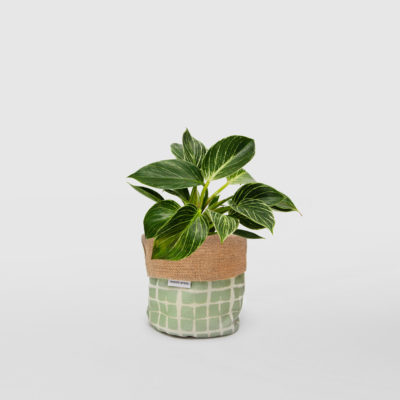 Philodendron Birkin Planter Bag Sage