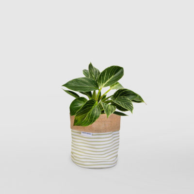 Philodendron Birkin Planter Bag Sage Stripe Small