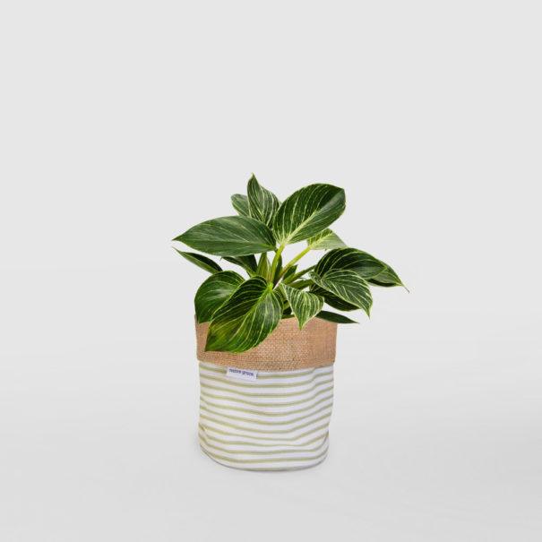 Philodendron Birkin Planter Bag Sage Stripe Small