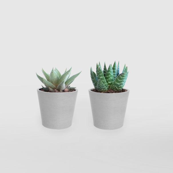 Succulent Duo Whitestone EcoPot